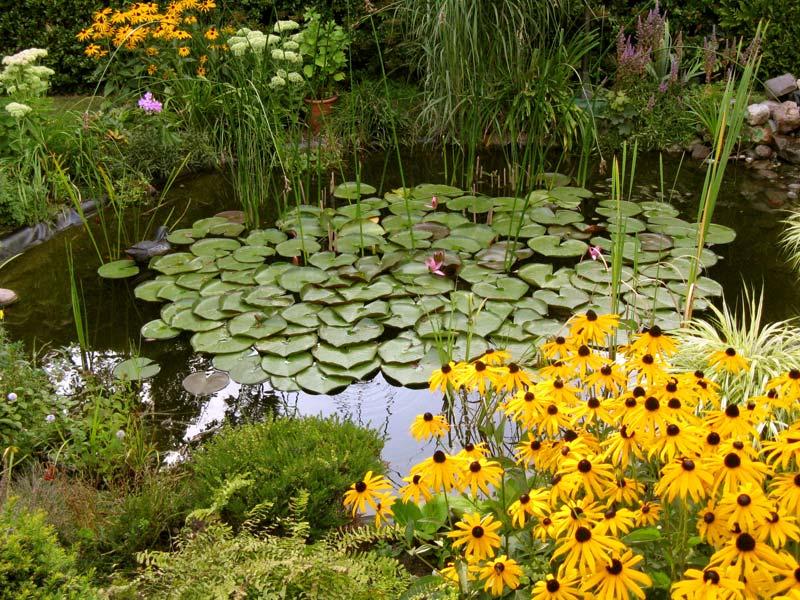Gartentipps for Garten tipps