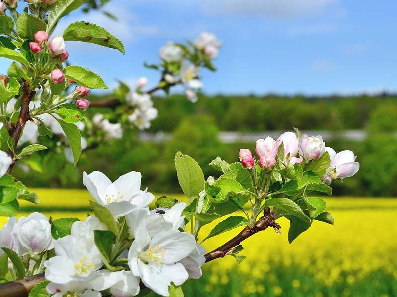 Heiter und Freundlich: Die Frühlingshafte Blütenpracht